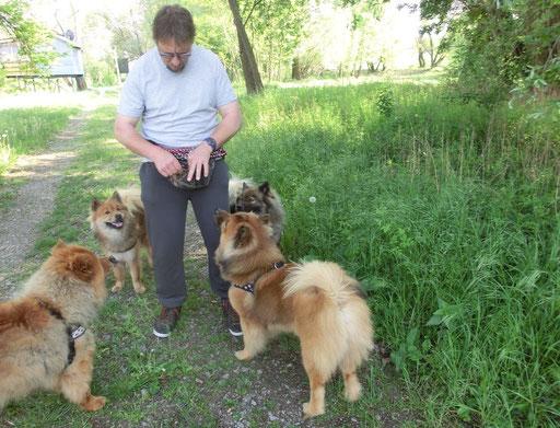 Spaziergang mit Mexx, Shiwa, Ylvi und Ronja