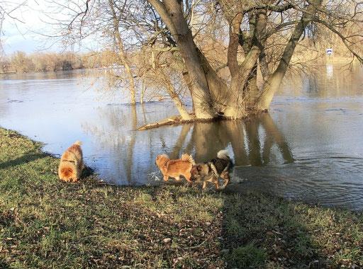Hochwasser - da gefällt den Mädels :-)))