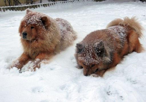Shiwa und Ronja - endlich Schnee!