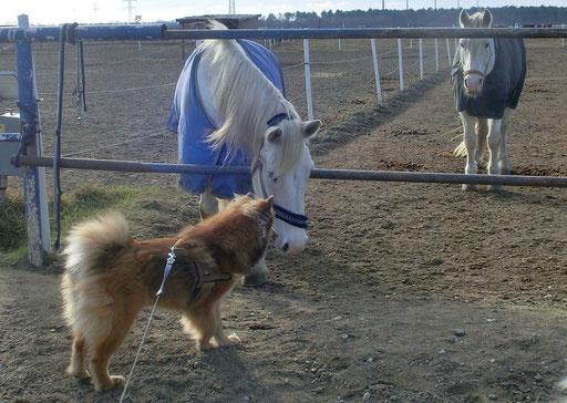 Ronja Schnauze an Schnauze mit einem Pferd