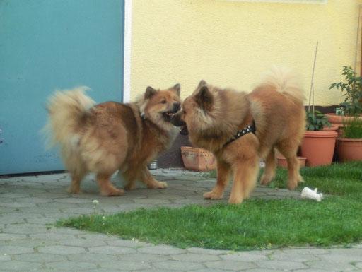 Geschwisterliebe Ronja & Mexx