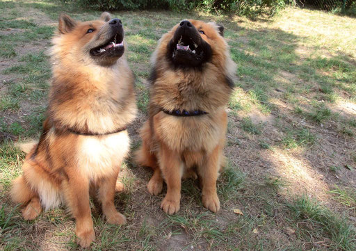 Ronja & Bruder Mexx
