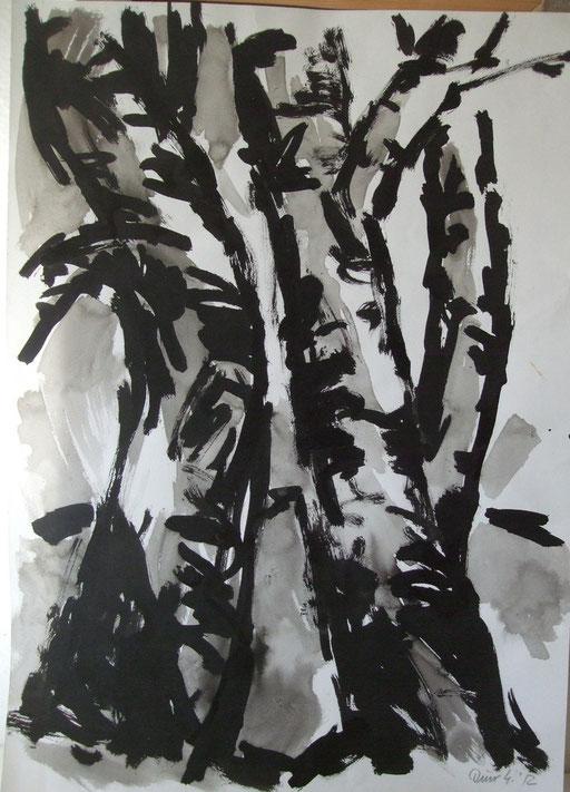 Birken, 61x43cm