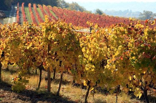Vignoble de Jurançon - www.le-refuge-des-marmottes.com
