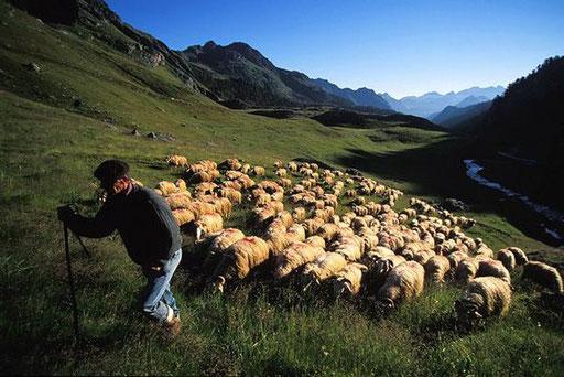 Berger en Vallée d'Ossau - www.le-refuge-des-marmottes.com