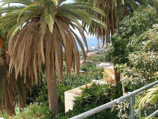 in La Galera - schönes kleines Hotel Jardin Concha mit Meerblick