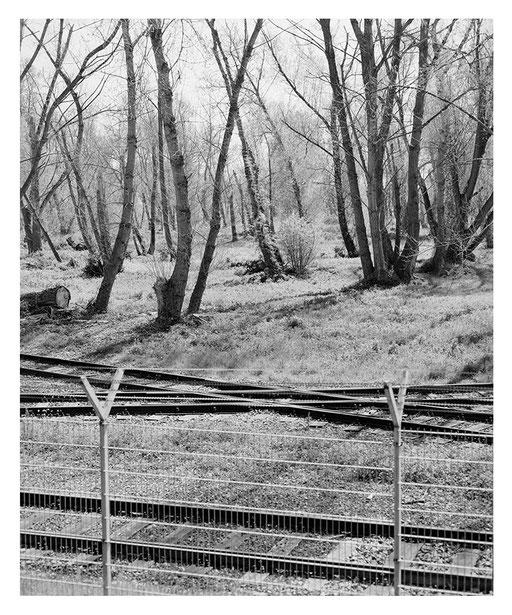 Wald im Hafen, Neuss, Pigment Print, 96x75cm