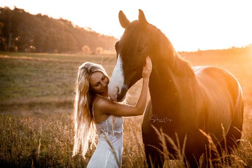 Zauberlicht Pferd
