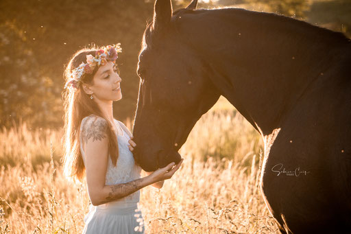 Pferd im Sonnenaufgang