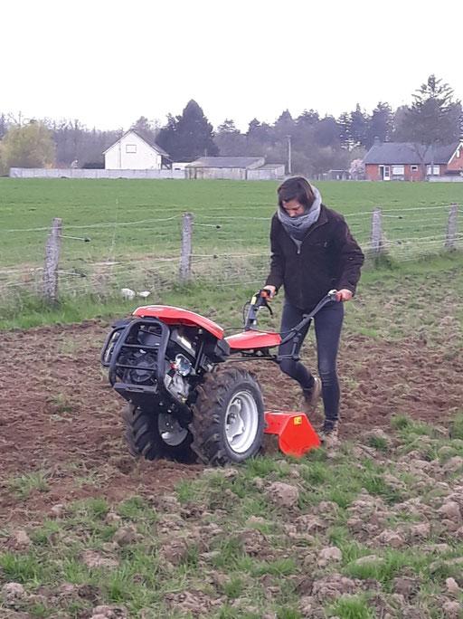 Préparation du terrain pour les plantations