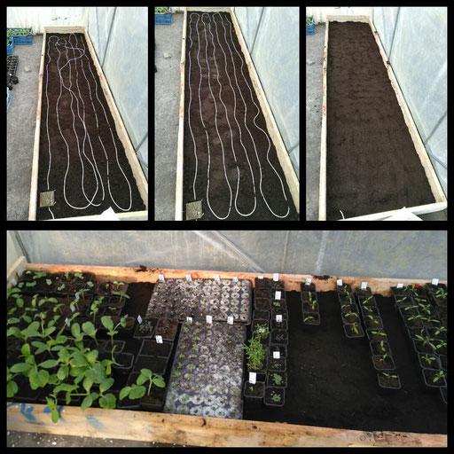 Installation du câble chauffant pour les semis dans la petite serre