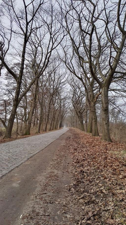 Typisch Brandenburg: endlose, schnurgerade Alleen