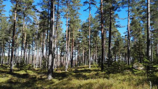...durch sonnendurchfluteten Wald
