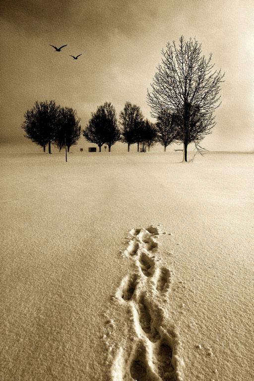 """""""Return"""" - Spuren im Schnee, monochrom"""