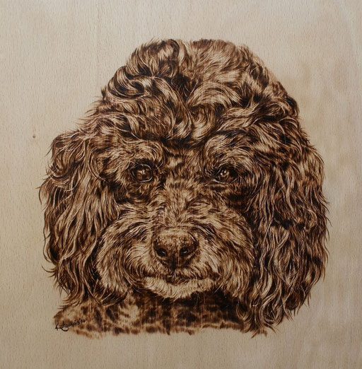 Portrait Pudel in Brandmalerei, Buchenholz, 23x23cm