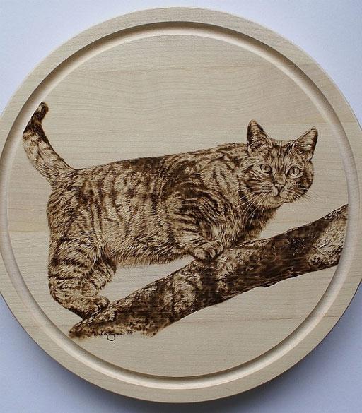 Portrait einer Katze auf einem Essbrett