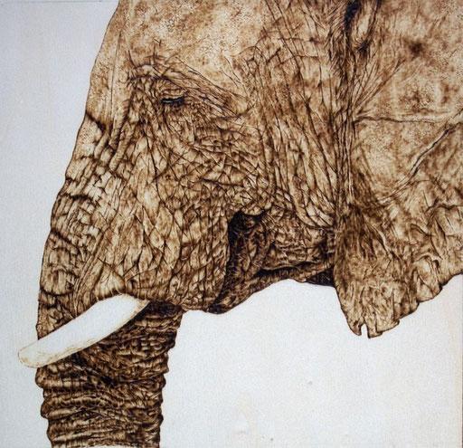 Elefant, Pappelholz
