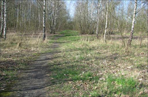 Naturwanderweg durch den Auenwald