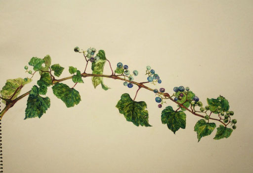 野葡萄 ノブドウ