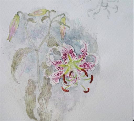 Speciosum lily  鹿の子百合 カノコユリ