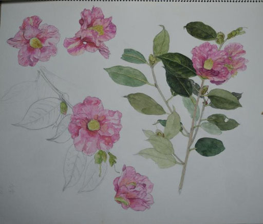 Camellia 椿