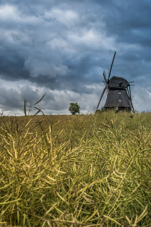 Windmühle Farve im Sommer mit Rapssat,Raps