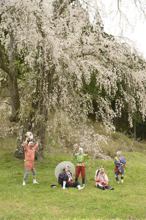 福田寺の糸桜:三春の滝桜の子、合戦場のしだれ桜の親桜と言われる桜。