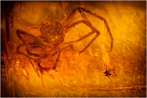 144. Araneae, Spinne, Baltic Amber