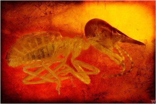 217. Isoptera, Termite, Nasute, Dominican Amber