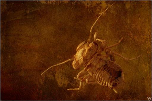 421. Psocoptera, Staublaus, Baltic Amber