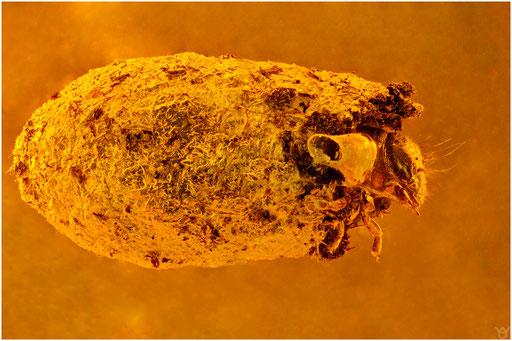32. Köcher mit Larve, Baltic Amber