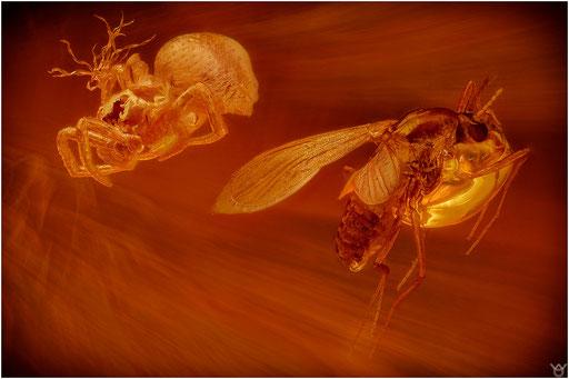 149b. Nematocera, Mücke, Araneae, Spinne, Baltic Amber