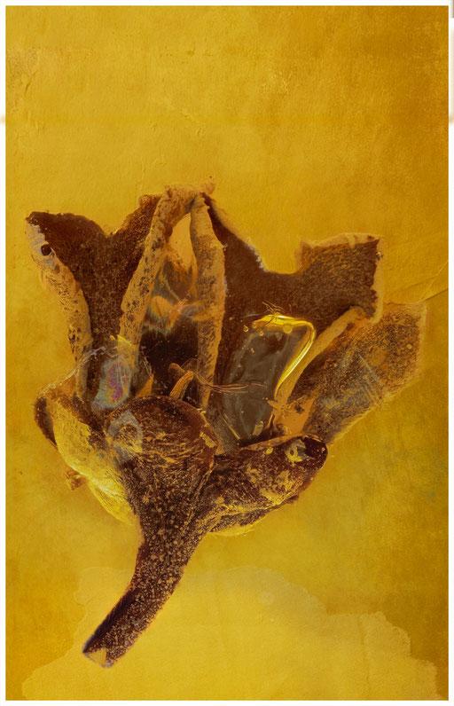 7006, Teestrauchgewächs, Baltic Amber