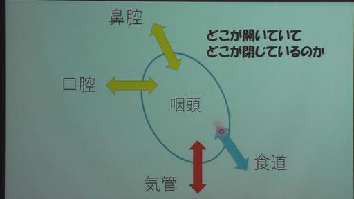 のど(咽頭)には4つの管がつながっている。