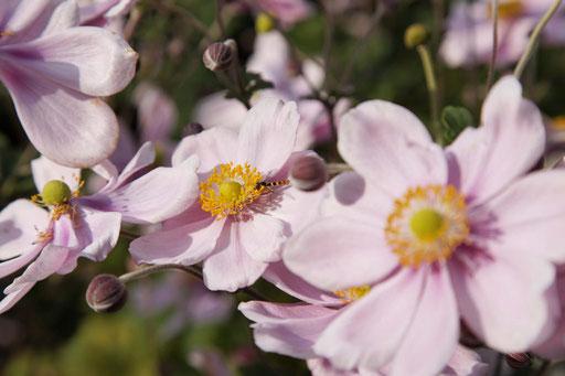 Umänderung Pflanzen - Durrer Gartenbau AG Herzogenbuchsee