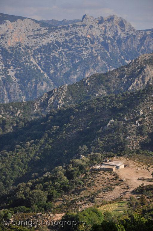 parco nazionale del foresta di monte arcosu gennargentu I