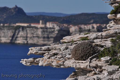 corsica coast IX - the edge