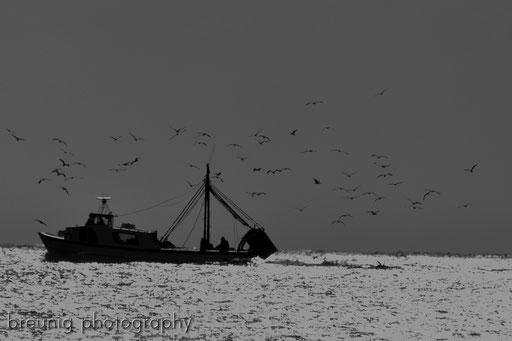 incoming fishermen and a mass of sea gulls