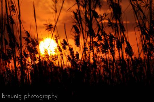 sunset at albufera