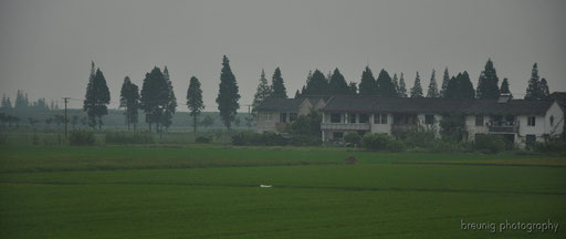 countryside and rice fields