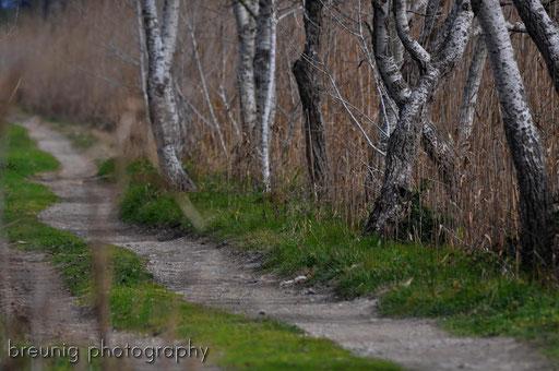 paths II