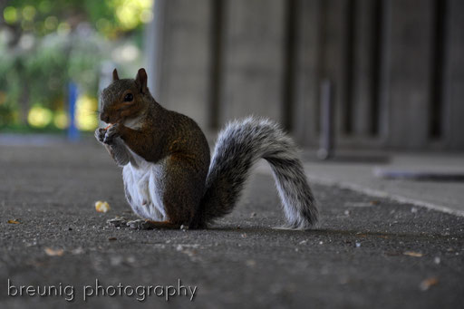squirrel II