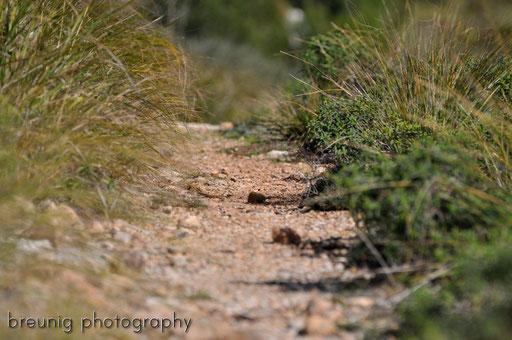 paths I