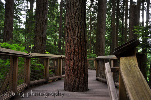 capilano tree top walk II