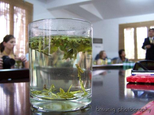 tea plantage, hangzhou II