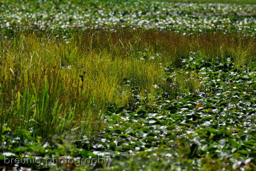 beaver lake I