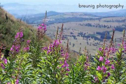 landscape near clermont-ferrand