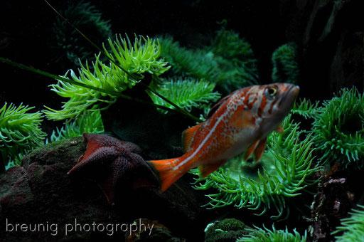 vancouver aquarium III