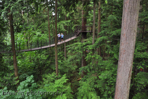 capilano tree top walk I