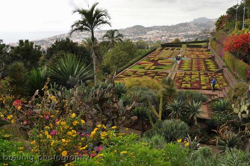 jardim botânico VI
